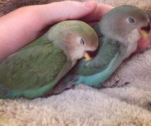 bird, aesthetic, and animal image