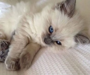 adorable, blue, and eyes image