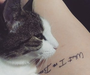 aesthetic, thigh tattoo, and cats image