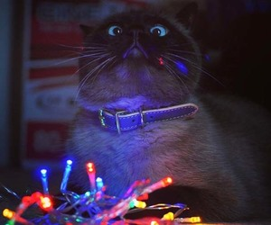 aesthetic, cat, and lights image