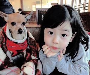 dog, japan, and japanese image