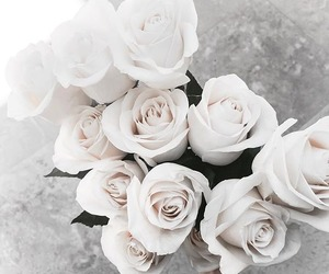 flowers, rose, and white image
