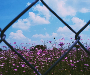 clouds, flowers, and sky image