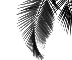wallpaper, background, and palms image