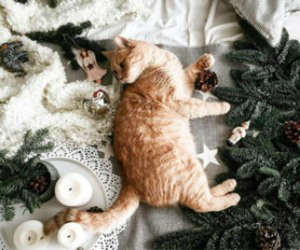 aesthetic, animal, and cats image