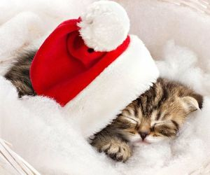 adorable, holidays, and kitten image