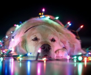 dog, light, and christmas image
