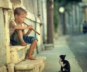 music, street, and cat image