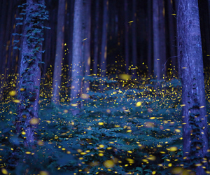fireflies, forest, and glow image