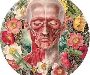 anatomia, wallpaper, and face image