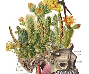 cactus and skull image