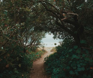 nature, beach, and sea image