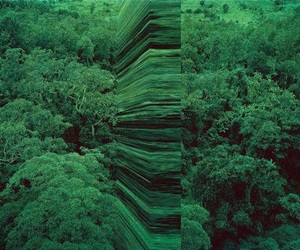 theme, green, and forest image
