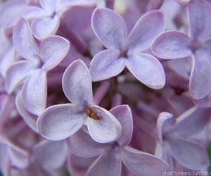 lilac, purple, and lavender image