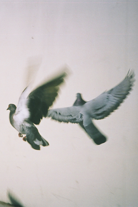 bird, fly, and dove image