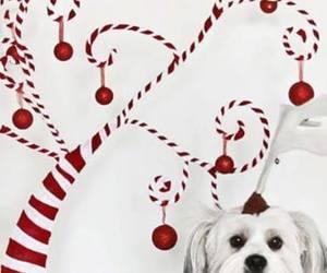 background, christmastime, and iphone image
