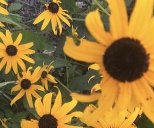 landscape and sunflower image