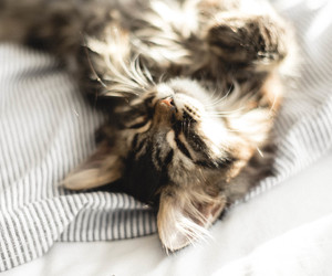 article, cat, and cosy image
