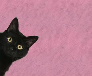 gato, rosa, and fondo image