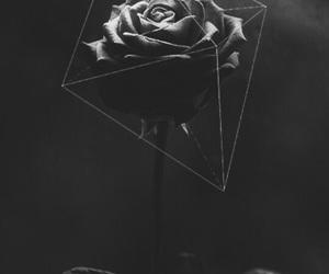wallpaper, black, and rosas image