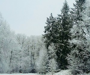 christmas, green, and snow image
