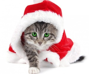 cat, merry christmas, and red image