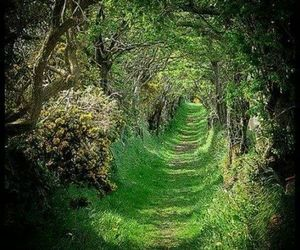 forest, green, and hidden image