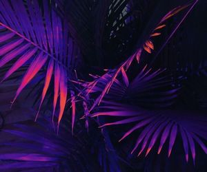 purple, neon, and plants image