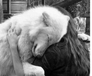 dog, wolf, and white image