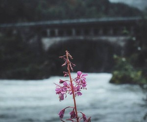 bridge, nature, and flower image