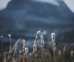 grasses, mountain, and nature image