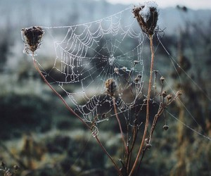 nature, photo, and web image