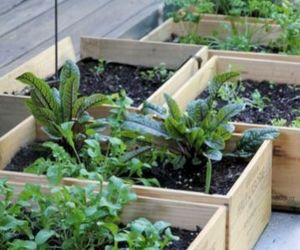vegetable garden and small vegetable garden image