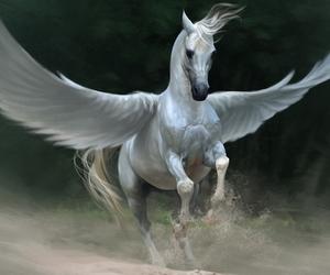 horse, pegasus, and animal image