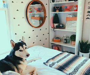 dog, tumblr, and home image
