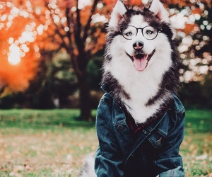 autumn, furry, and picture image