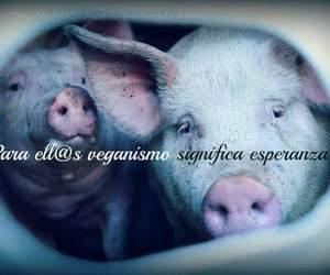 govegan and veganismo image
