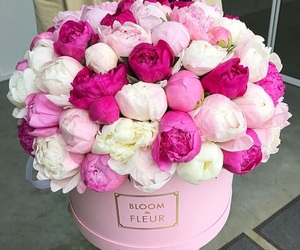 beauty, flower, and peonies image