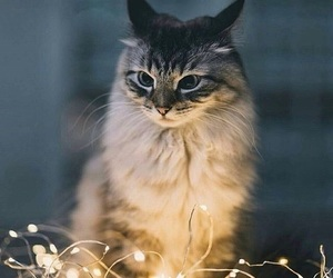 cat, animals, and christmas image