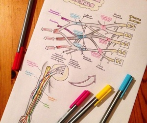 medicine, anatomy, and notes image