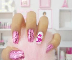 beauty, flamingo, and flamingos image