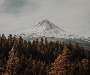 landscape, nature, and vintage image
