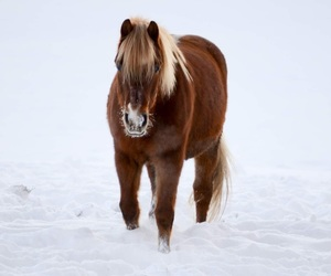 horse, photography, and equistrian image