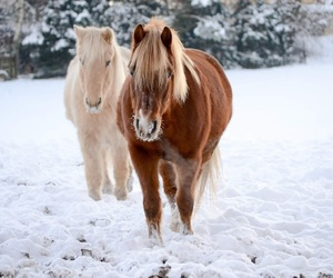 horse, horses, and pferde image