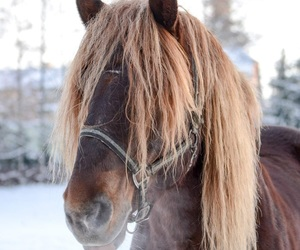 cold, snow, and horse image