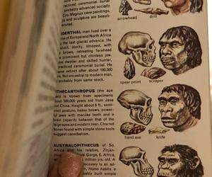 biology, evolution, and skulls image
