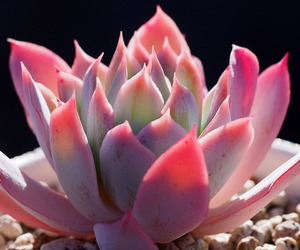 aesthetic, cactus, and flower image