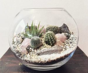 home, cactus, and decoration image