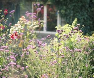 backyard, country, and countryside image