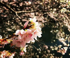 aesthetic, beauty, and japan image